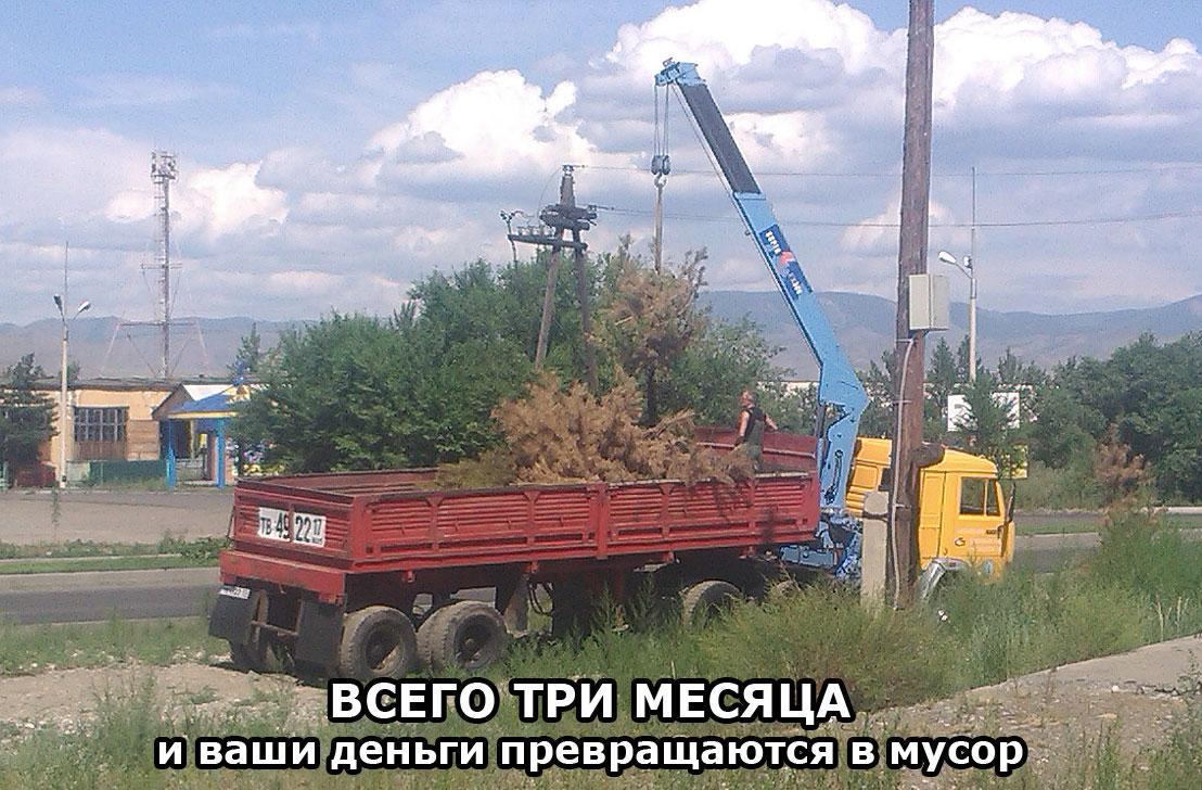 http://risk-inform.ru/foto/img_box/elki.jpg